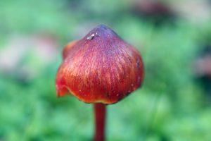 magic-mushroom-1384017